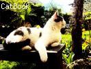 Mynù la Tigre del Bengala